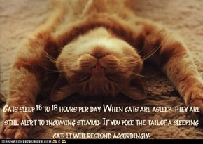 Fun Cat Facts #14