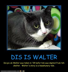 DIS IS WALTER