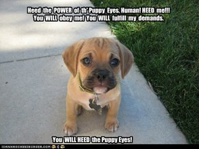 Heed the Puppy Eyes!