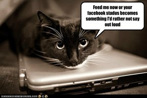Cats are always thinking ahead