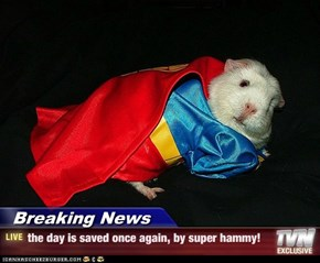 Breaking News - the day is saved once again, by super hammy!