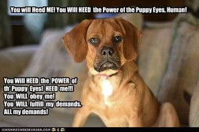 HEED  the Puppy Eyes-6
