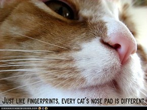 Fun Cat Facts #15