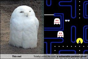 This Owl Totally Looks Like a Vulnerable Pac-Man Ghost