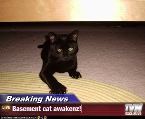 Breaking News - Basement cat awakenz!