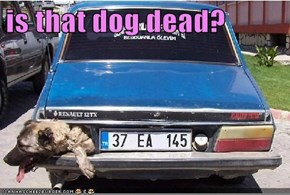 is that dog dead?