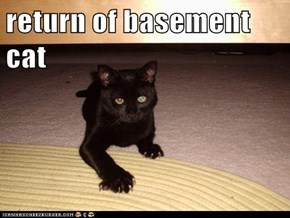 return of basement cat
