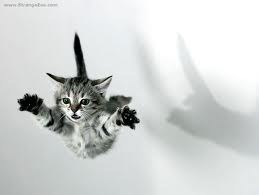 Flying Kitten FAIL
