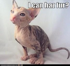 I can haz fur?