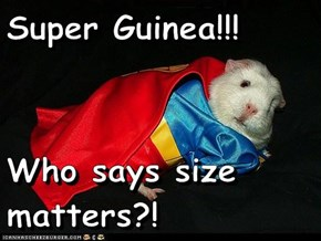 Super Guinea!!!  Who says size matters?!