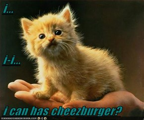 i... i-i... i can has cheezburger?