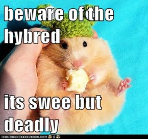 beware of the  hybred  its swee but deadly