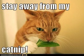stay away from my   catnip!