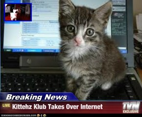 Breaking News - Kittehz Klub Takes Over Internet