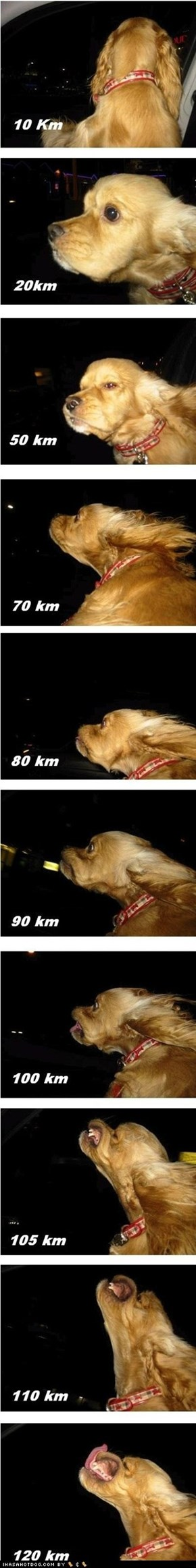Dog Vs Speed