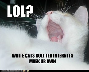 Seriously, what is with all the white cats on the internet?