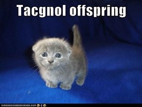 Tacgnol offspring