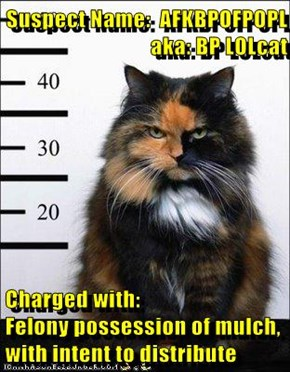 Suspect Name:  AFKBPOFPOPL aka: BP LOLcat  Charged with:                    Felony possession of mulch, with intent to distribute