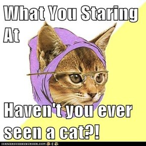 What You Staring At  Haven't you ever seen a cat?!