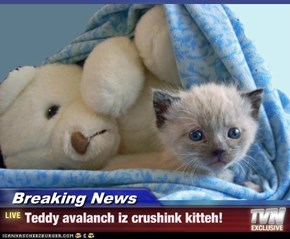 Breaking News - Teddy avalanch iz crushink kitteh!