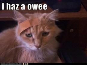 i haz a owee