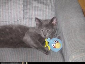 Angry bird, calm kitty