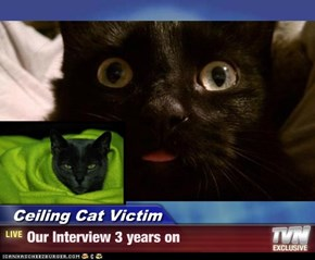 Ceiling Cat Victim - Our Interview 3 years on