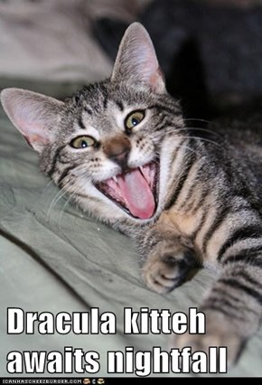 Dracula kitteh awaits nightfall