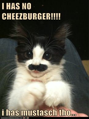 I HAS NO CHEEZBURGER!!!!  i has mustasch tho...