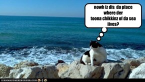 nowh iz dis  da place where der toona chikkinz of da sea iives?