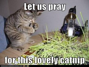 Let us pray  for this lovely catnip