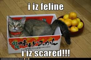 i iz feline  i iz scared!!!