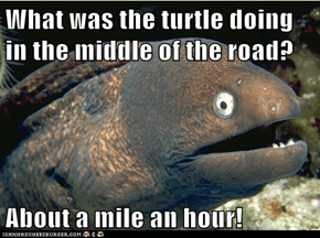 What was the turtle doing in the middle of the road?  About a mile an hour!