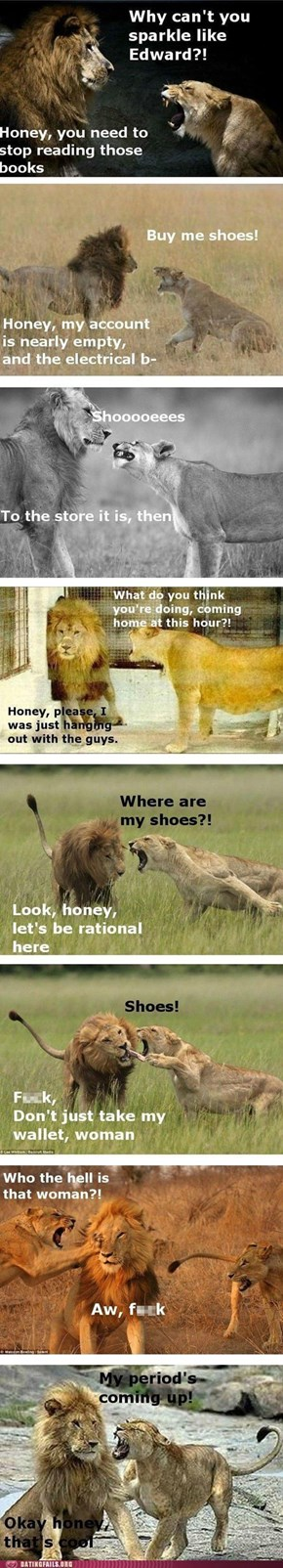 Lions Actually Really Like Shoes