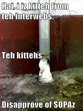 Hai, i iz kitteh from teh interwebs. Teh kittehs Disapprove of SOPAz