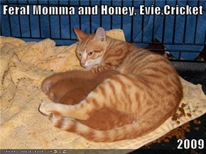 Feral Momma and Honey, Evie,Cricket  2009