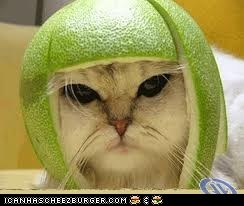 MELON SAMURAI KITTY!!!
