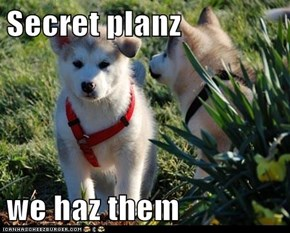 Secret planz  we haz them
