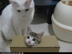 Cyoot Kittehs of teh Day: And for My Next Trick...