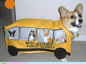 Acting Like Animals: The Corgi School Bus