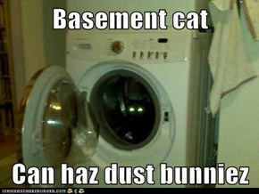 Basement cat  Can haz dust bunniez