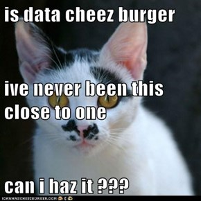 is data cheez burger  ive never been this close to one  can i haz it ???