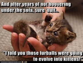 "And after years of not hoovering under the sofa, sure 'nuff...  ""I told you those furballs were going to evolve into kittens!"""