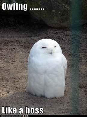 Owling ........