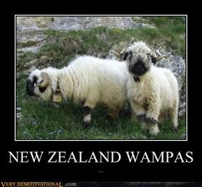 NEW ZEALAND WAMPAS