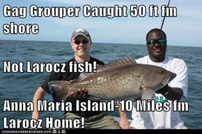 Gag Grouper Caught 50 ft fm shore Not Larocz fish! Anna Maria Island-10 Miles fm Larocz Home!