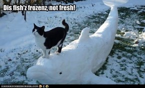 Dis fish'z frozenz, not fresh!