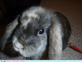 Reader Squees: Lil' Bunny Buttons