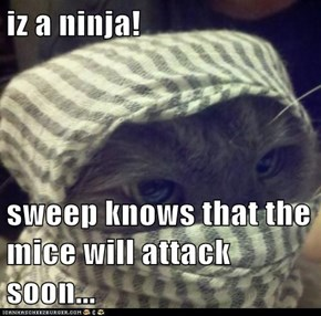iz a ninja!  sweep knows that the mice will attack soon...