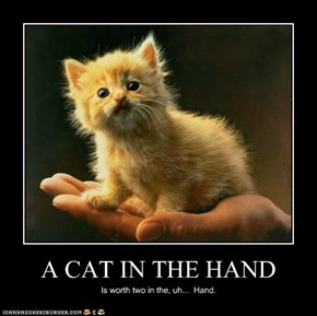A CAT IN THE HAND